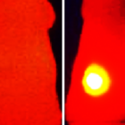Infrared thermal image (right) shows elevated tumor (yellow) temperature in mice after laser irradiation in with OMV-melanin treated mice. The image on the left shows a mouse treated with OMVs without melanin. Image: V. Gujrati (TUM)